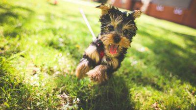 Srečen pes je zdrav pes