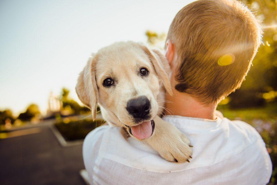 Izkušnje lastnikov s surovo hrano za pse GOOD4DOGS